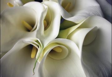 花葬儀のイメージ